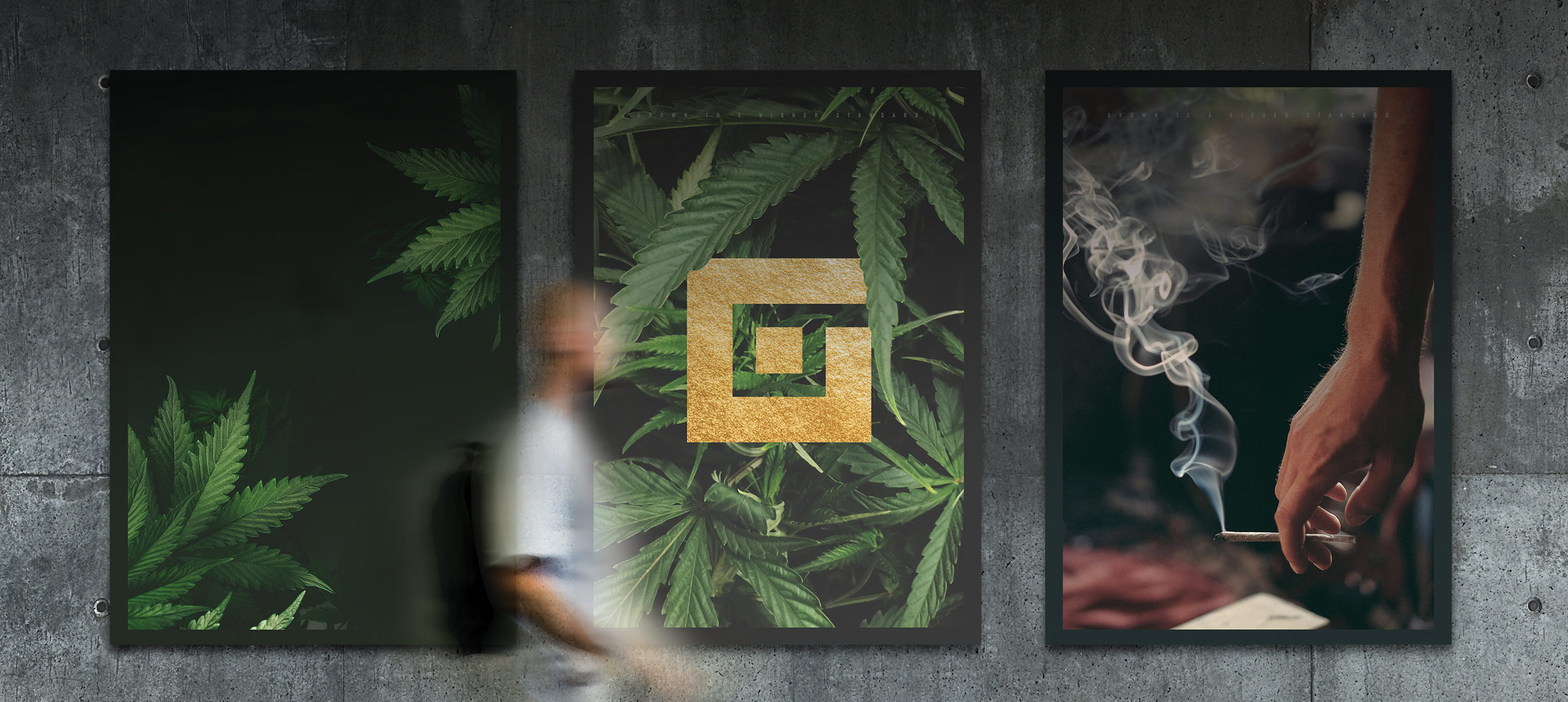 Gifted Grower brand design, branding, posters